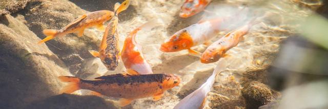 Pousada Spa Mirante da Colyna - Peixes