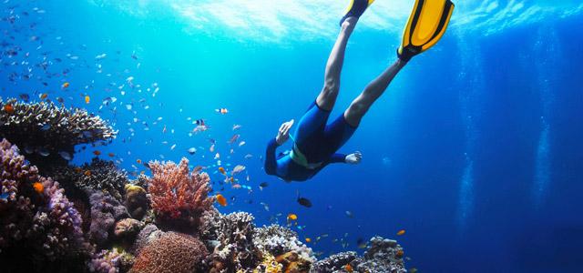 Mergulho nas águas cristalinas de Fernando de Noronha