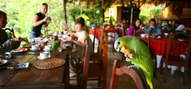 O café da manhã do Amazon EcoPark, como em todo hotel de selva, tem sempre convidados ilustres, como esse papagaio, que está saboreando, provavelmente, o pedaço do seu pãozinho