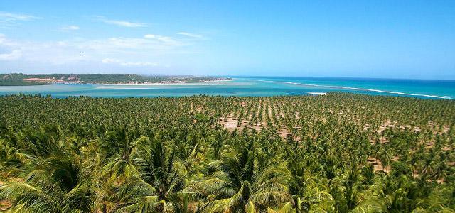 A Praia de Ipióca é rica em verde e cenários paradisíacos. Visite as melhores praias de Maceió
