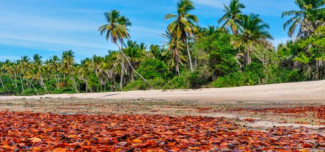 Moreré (Boipeba – Bahia) - Praias Mais Bonitas do Brasil
