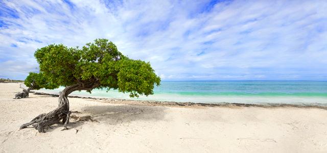 Praias do Caribe - Eagle Beach - Praias do Caribe