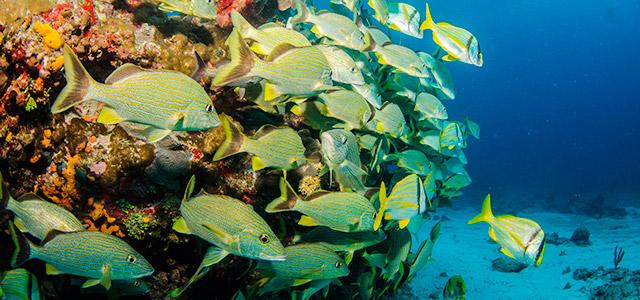 Mergulho em Varadero, Cuba.