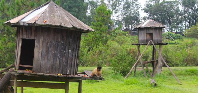 Os animais são incríveis no Mavsa Resort