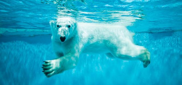 O que fazer nas férias: Zoológico