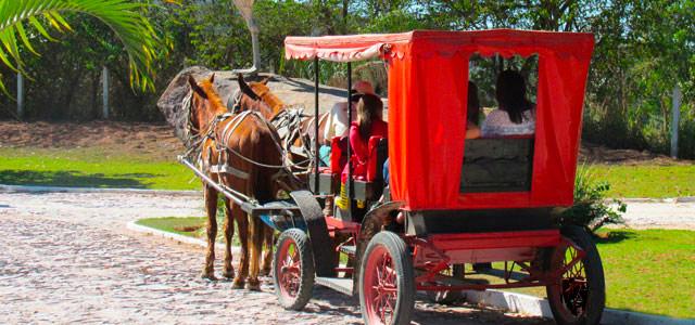Carruagem no Parque do Avestruz