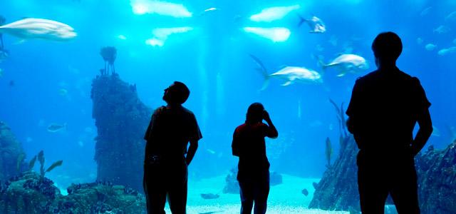 Oceanario - O que fazer em Lisboa