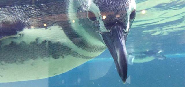 Pinguinário - Aquário de Ubatuba