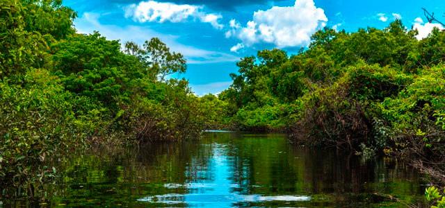 Descubra as riquezas da Amazônia no Amazon Jungle Palace!