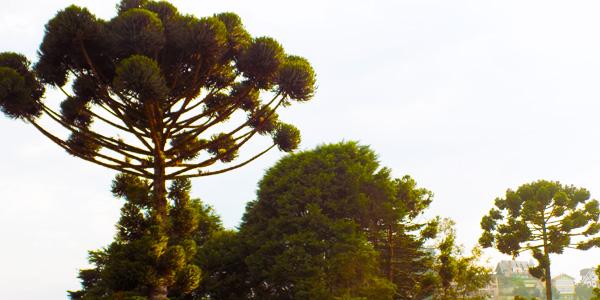 Pousada das Hortênsias - Natureza