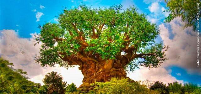 Disney's Animal Kingdon