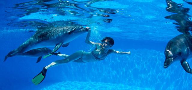 Cozumel - Dolphinaris