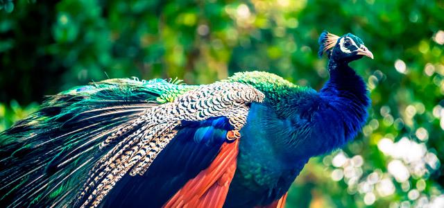 Santos - Parque Zoobotânico Orquidário
