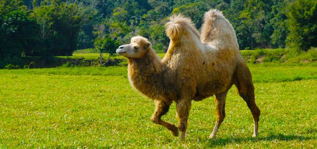 camelo-Portobello-Resort-zarpo-magazine