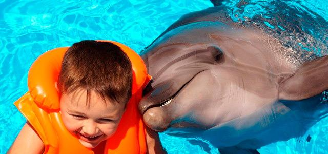 dolphin-discovery-caribe-zarpo-magazine