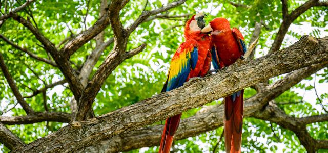 araras-parque-nacional-costa-rica-zarpo-magazine