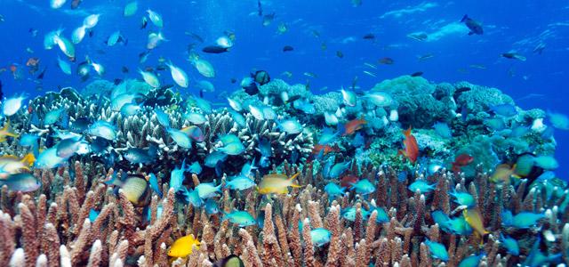mergulho-maldivas-zarpo-magazine