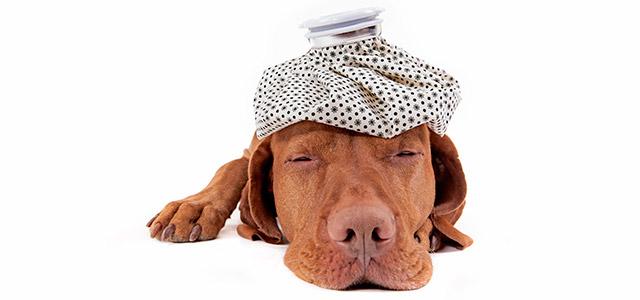 cachorro-zarpo-magazine