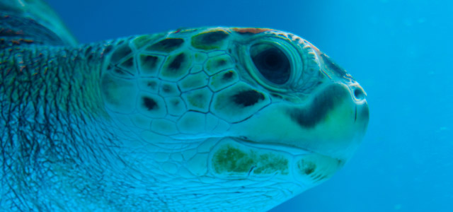 Sea Aquarium - Curaçao