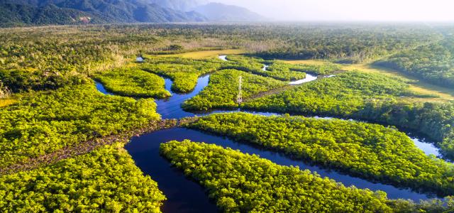 Floresta Amazônica – Amazonas: