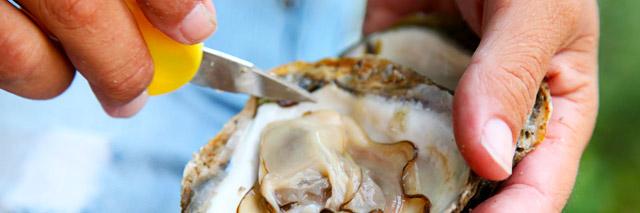 Limpeza das ostras antes do preparo