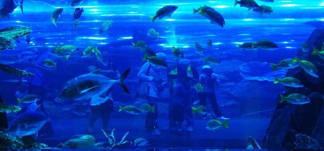 Aquário Dubai Mall
