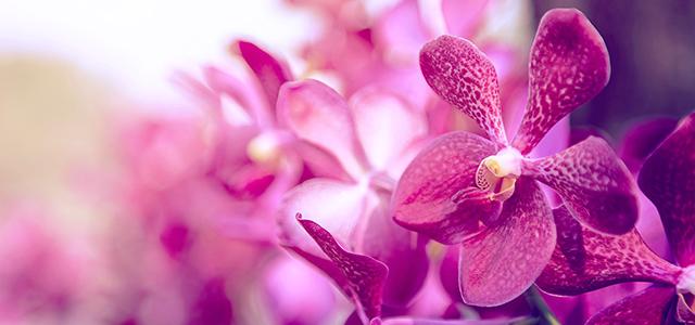 Holambra - Orquídeas
