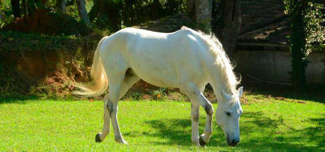 Passeio a cavalo para interagir com a natureza