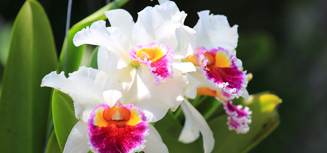 O sertão próximo à praia de Camburi é aonde você encontra bromélias, orquídeas, cachoeiras e muita mata atlântica