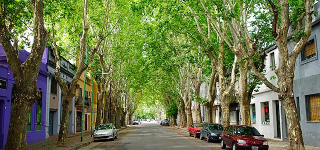 Palermo Veijo, um dos bairros de Buenos Aires mais arborizados