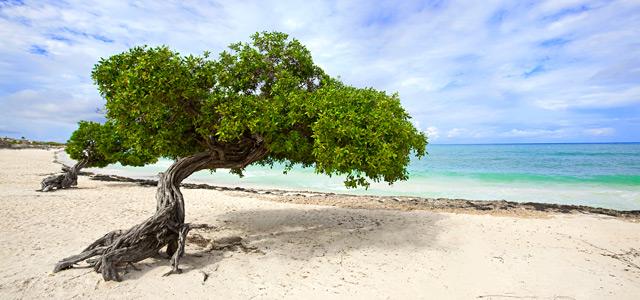 Div-divs são as clássicas árvores tortas do Caribe e deixam o cenário ainda mais surreal