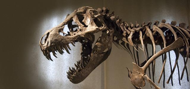 American Museum of Natural History deve estar no seu roteiro de viagem através do pacote Nova York