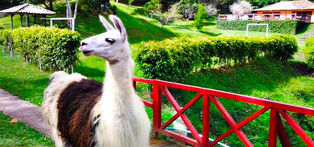 No Haras Radachi você aproveita o melhor do turismo rural, o contato com adoráveis animais