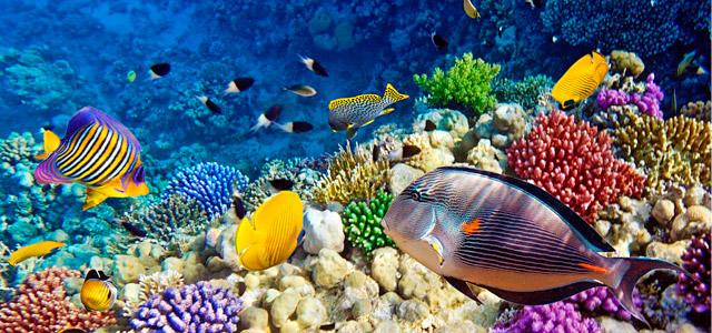 As Ilhas Maldivas são surpreendentes sobre e debaixo do mar!