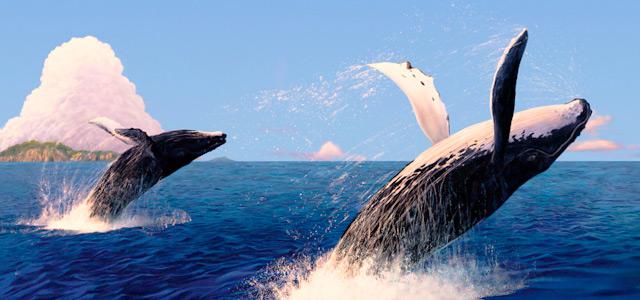 O Espetáculo das Baleias Jubarte