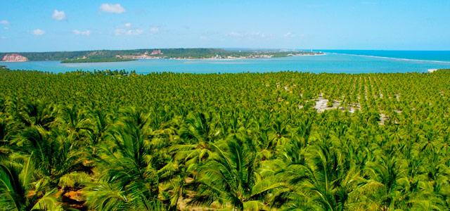 Alagoas: Os encantos do nordeste brasileiro