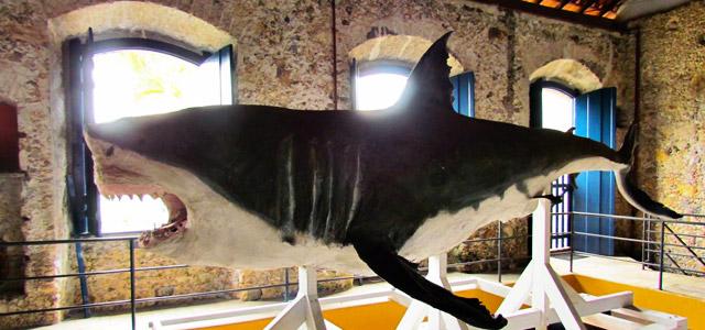 Visite o Museu Náutico Ilhabela e conheça diversas histórias de naufrágios na Ilha.