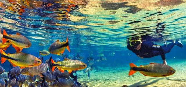 Mergulho em Bonito!