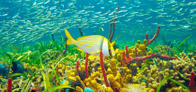 Aproveite para conhecer a natureza submersa de Montego Bay