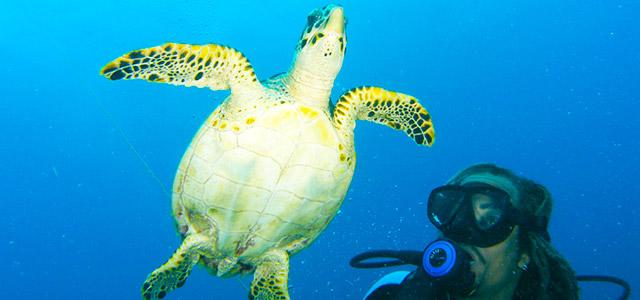 Mergulho nas águas de Barbados