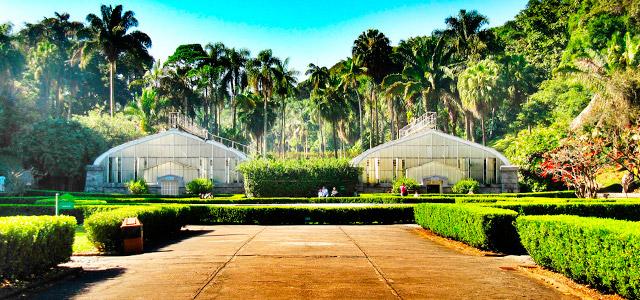 Jardim Botânico - Passeios em São Paulo