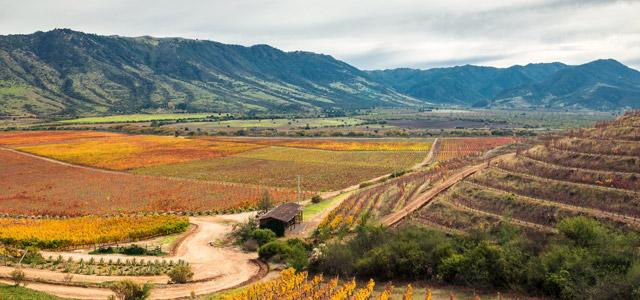 Vale do Colchágua - Viagem para o Chile