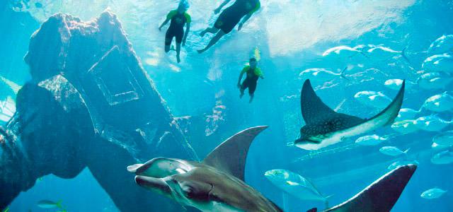 Experiência única: conhecer os encantos sob as águas do Caribe