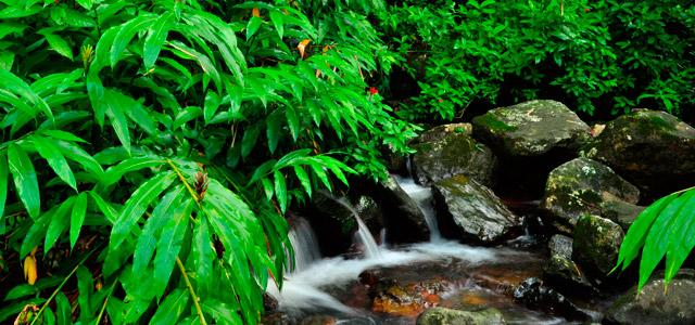 Natureza em Porto Rico