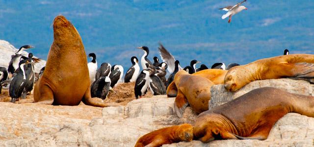 Leões marinhos da Patagônia