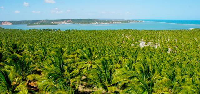 Barra de São Miguel - Praias de Alagoas