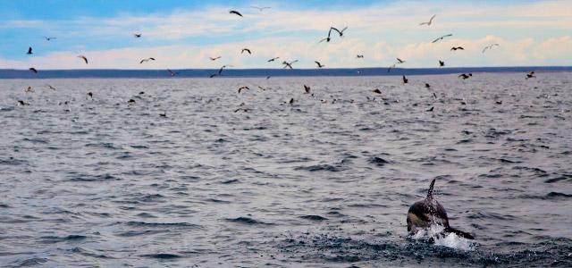 Golfinhos na Patagônia