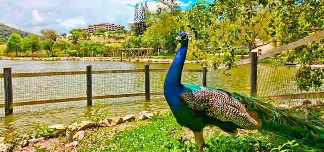 Natureza há disposição no Fazzenda Park Hotel
