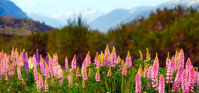 A Natureza é bela na Patagônia!