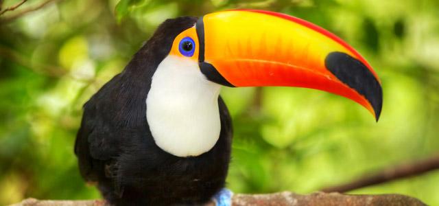 Parque das Aves - Foz do Iguaçu